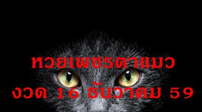 หวยเด็ดต้อนรับปีใหม่! หวยเพชรตาแมว งวด 16 ธันวาคม 59