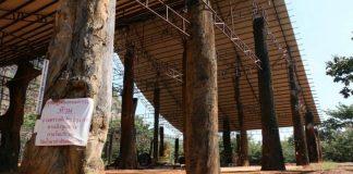 ติดป้ายห้ามขอหวย! วัดถ้ำผาดำ ใช้ตะเคียนทองอายุ 100ปี 108ต้น สร้างศาลาการเปรียญ