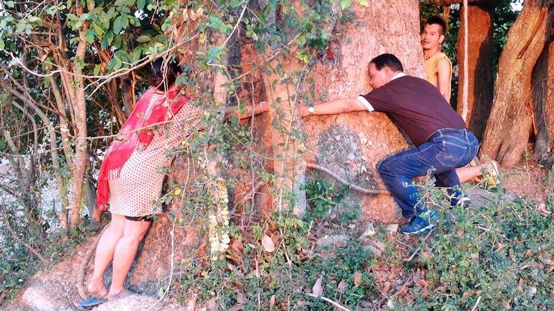 แห่ขอหวยต้นยางยักษ์100ปีกลางทุ่งนา เชื่อเป็นต้นไม้ศักดิ์สิทธิ์-ไม่มีใครกล้าตัด