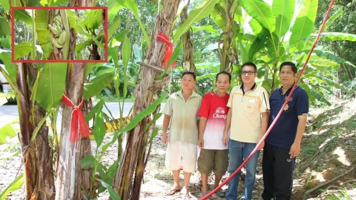 เจ้าของสวนเฮ ถูกหวย เลขเด็ดกล้วยไข่ประหลาดคล้ายคนท้องให้โชค